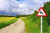 Постер, плакат: вид сельской дороги через поле пшеницы с Зрелые колосья летом и дикие животные получены