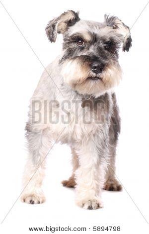 Adorable Little Dog