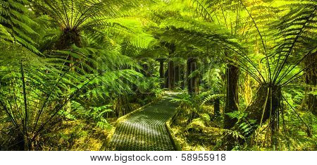 Beautiful Rainforest Walkway