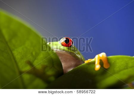 Frog shadow on the leaf
