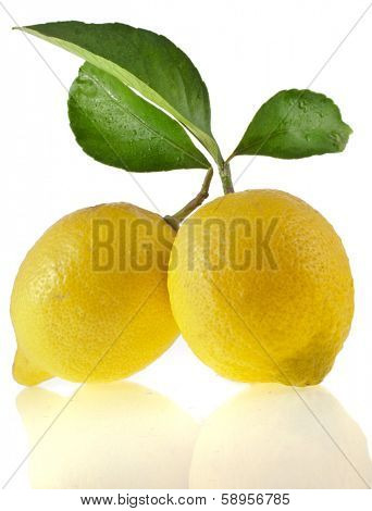 Lemon branch with green leaves  isolated on a white background