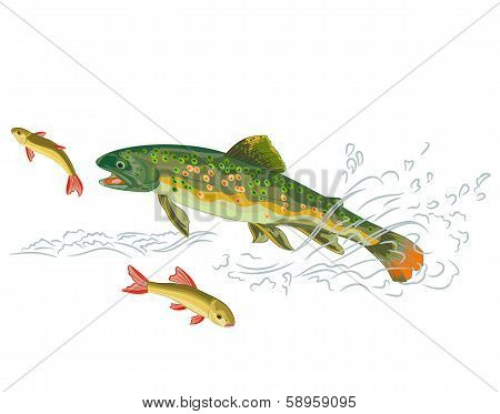 Brook Trout Fish
