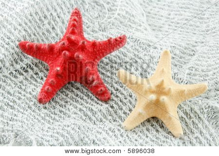 Colored Seashell (starfish) On A Fishing Net