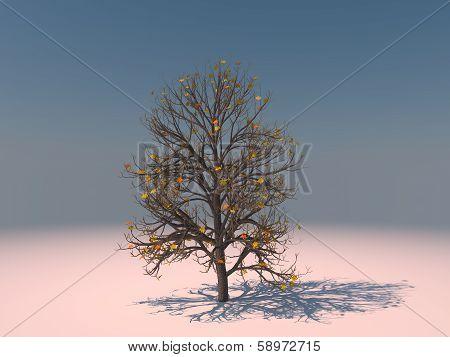 Aesculus Hippocastanum Winter