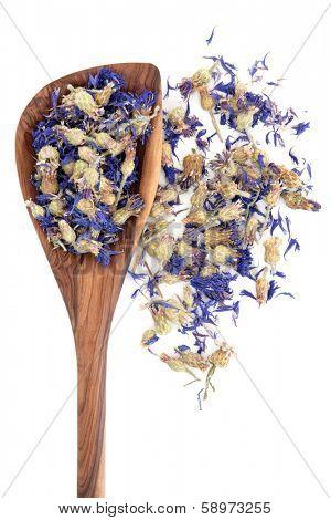 Dried cornflower herbal medicine in an olive wood spoon over white background. Centaurea cyanus.