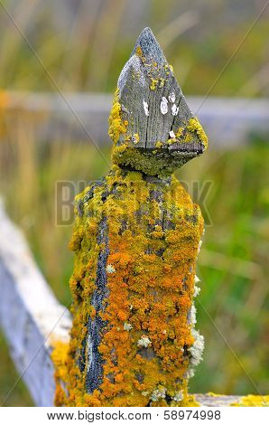 Old mossy fence post