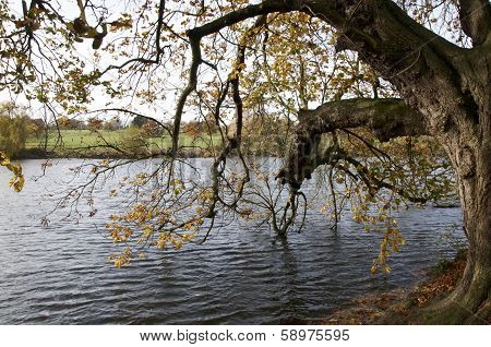 Trees Over Lake