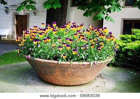 Yellow And Violet Heartseases In Ceramic Pot