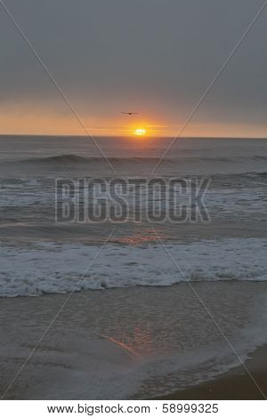 Seabird Flying Into A Dusky Ocean Sunset