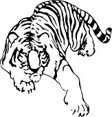 The vector sketch of a tattoo of tiger