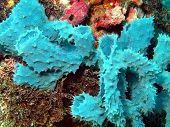 stock photo of cebu  - Underwater inhabitants of sea depths of strait Cebu, island Maktan, sponge ** Note: Shallow depth of field - JPG