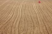 stock photo of south east asia  - Farmer in the field - JPG
