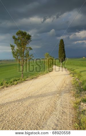Dirty Road In Tuscany