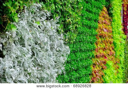 Living Plant Wall Background