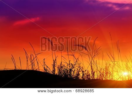 evening scene in steppe with herbs on sunset bacjground