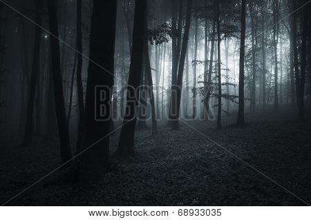 dark forest landscape with mysterious light