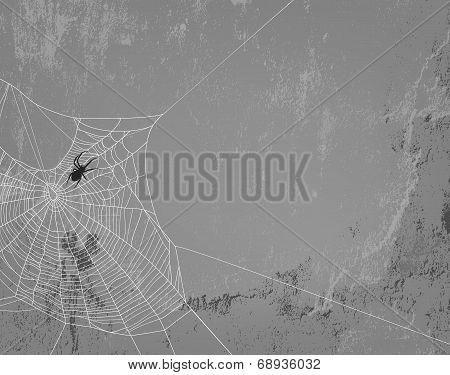 Spider Background