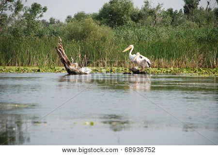 Nature landscape with wild birds in the Danube Delta, Romania