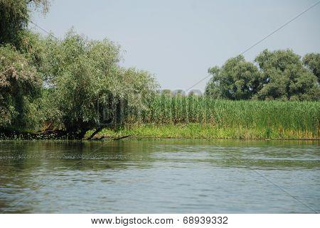 Nature landscape from the Danube Delta, Romania