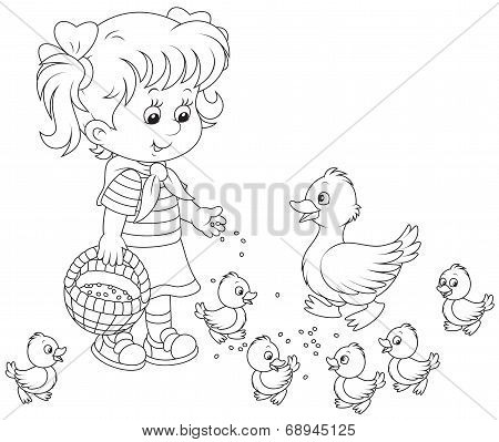 Girl feeding ducklings