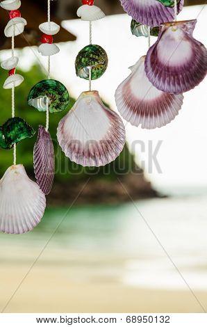Shells Hanging