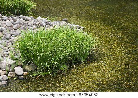 Japan, Himeji, Himeji Koko-en Gardens, stream, close-up
