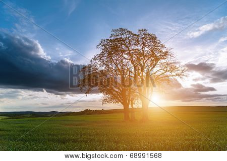 Sunset Over Spring Field In Country