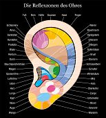 foto of reflexology  - Ear reflexology chart with accurate description of the corresponding internal organs and body parts - JPG