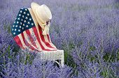 stock photo of purple sage  - American flag and hat on a wicker chair in a field of purple Russian sage.