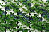 picture of climber plant  - Green plants wall life of the would - JPG