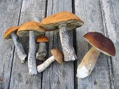 stock photo of eatables  - Eatable mushrooms laying on a wooden table - JPG