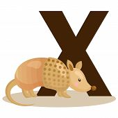 picture of armadillo  - the letter x for the animal xenurine - JPG