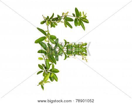Alphabet Creeper Flower Isolated