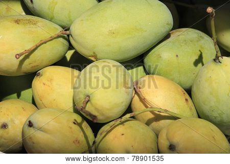 Closeup Of A Small Group Of Mangoes, Some Still Green And Some More Ripe.