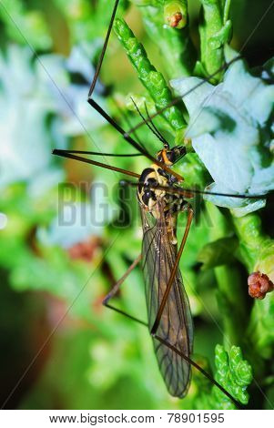 insect on shrub