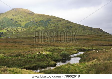 National park Connemara.