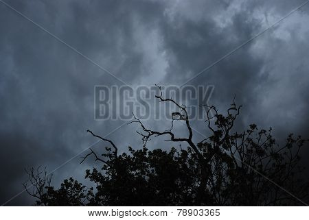 storm clouds and trees