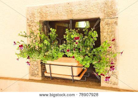 Pot Of Flowers In A Niche Walls Of The House