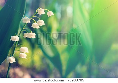 Background with blooming lilies of the valley
