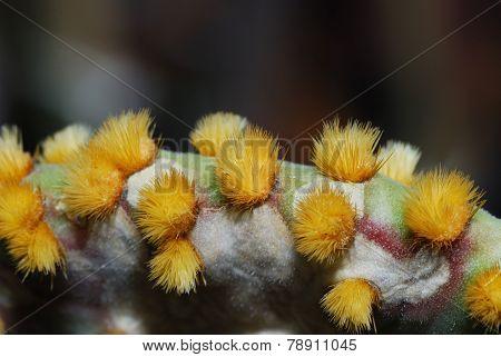 fine cactus spines