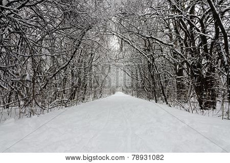 Trees Covered By Snow