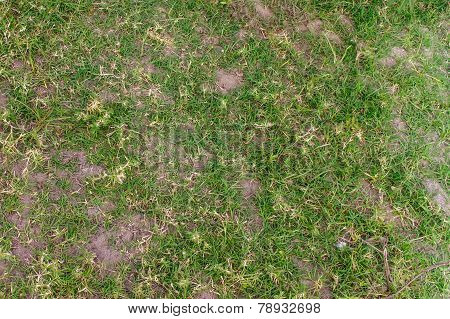 Damaged Grass Texture For Background
