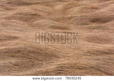 Texture Background Of Dry Grass