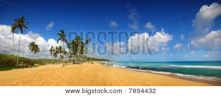 Tropical Beach In Punta Cana, Panoramic