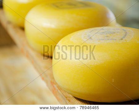 Dutch Cheeses
