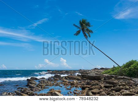 Tropical Rocky Beach