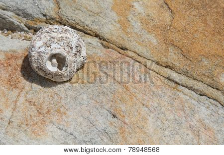 Seashell On Rock