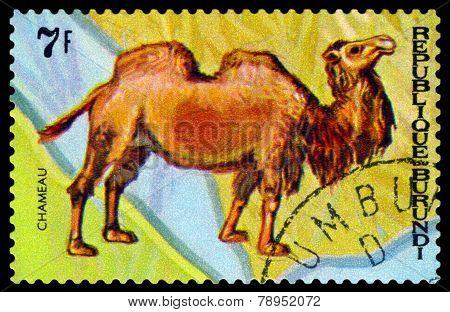 Vintage  Postage Stamp. Animals Burundi, Camel Chameau.