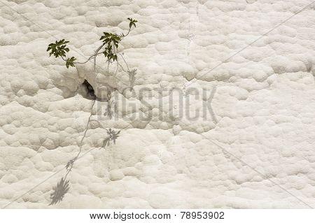 Flower On Travertine