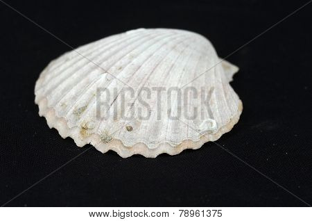 shell on black
